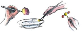 Illustration: peng